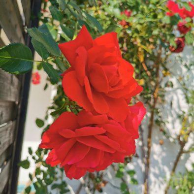 Ferienwohnung Rose